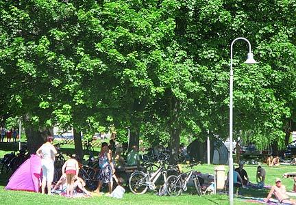 Bei Hitze spenden große Bäume Schatten